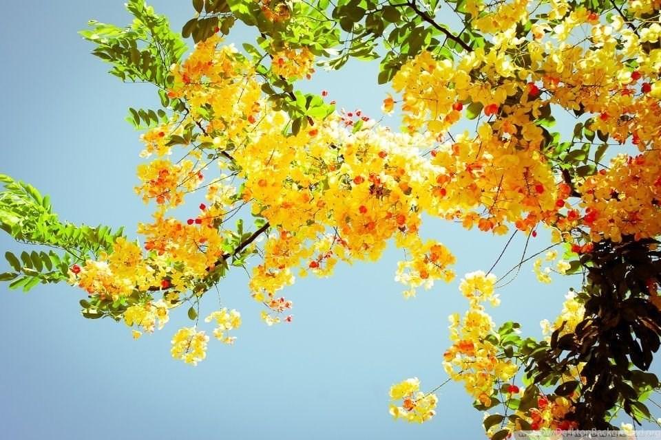 184328 beautiful flowers hd desktop wallpapers high definition