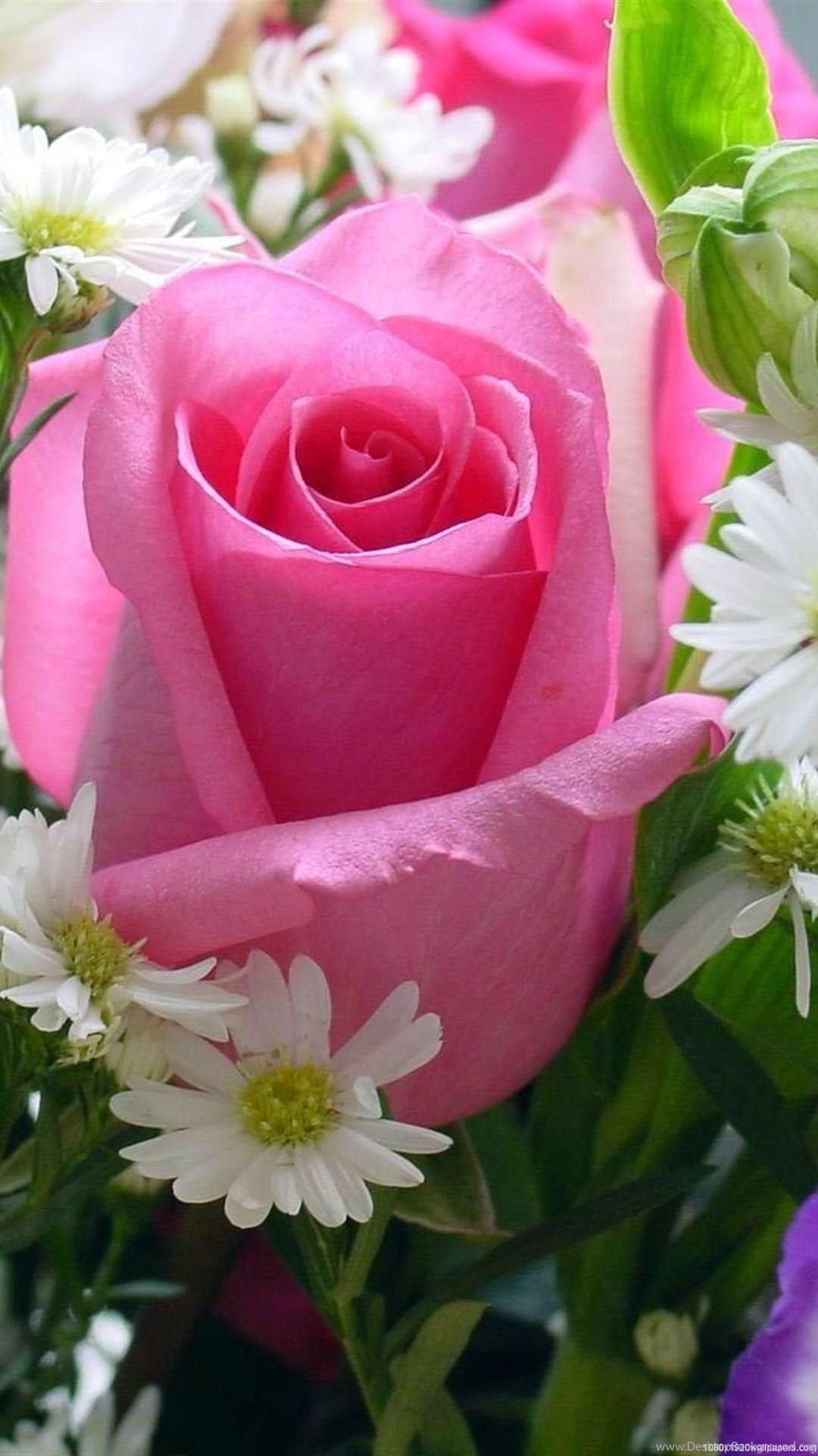 1080x1920 Rose Pink Flowers Wallpapers Hd Desktop Background