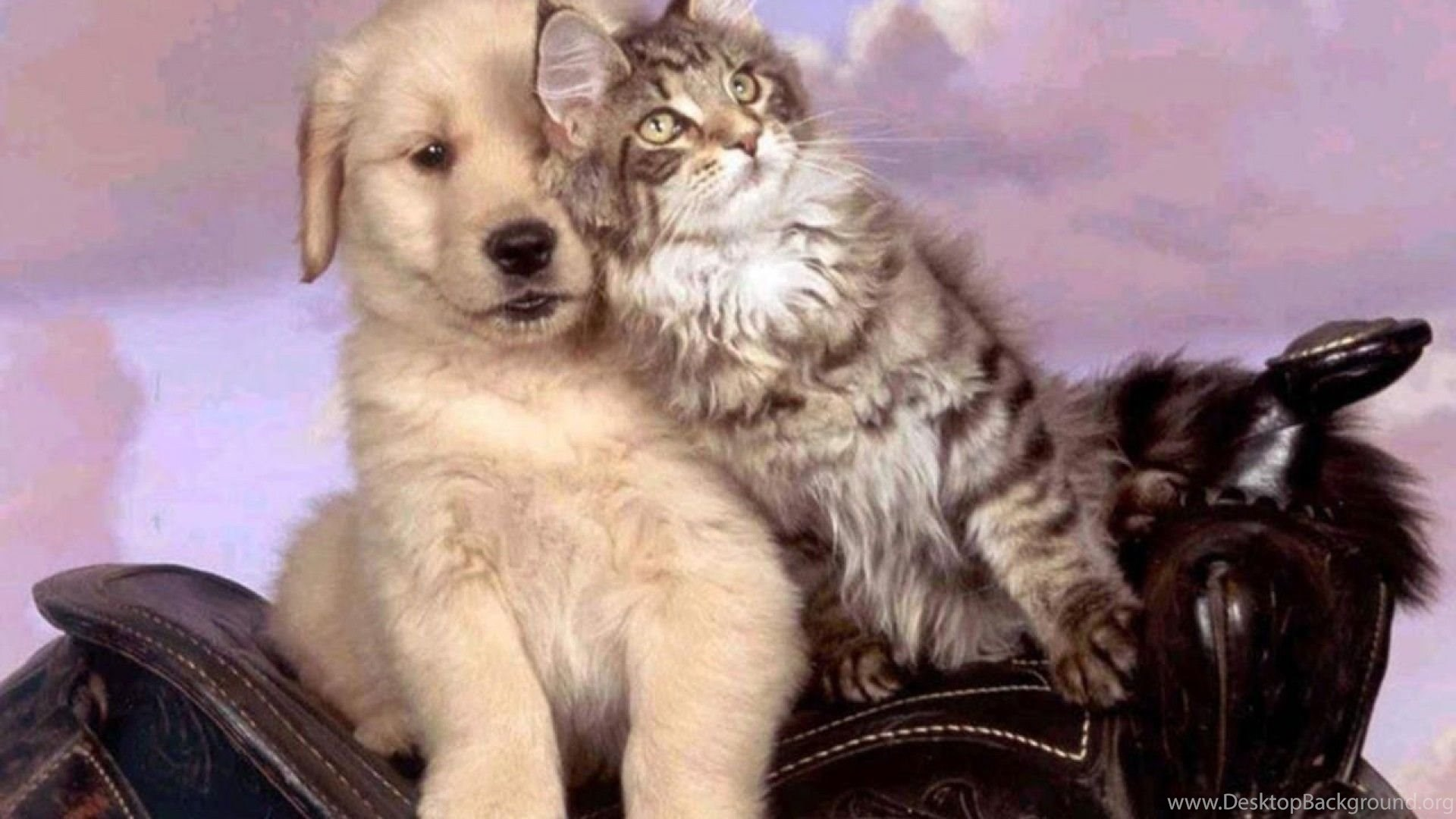 Cats: Pet Love Animal Cat Puppy Kitten Dog Cats Animals Dogs ...
