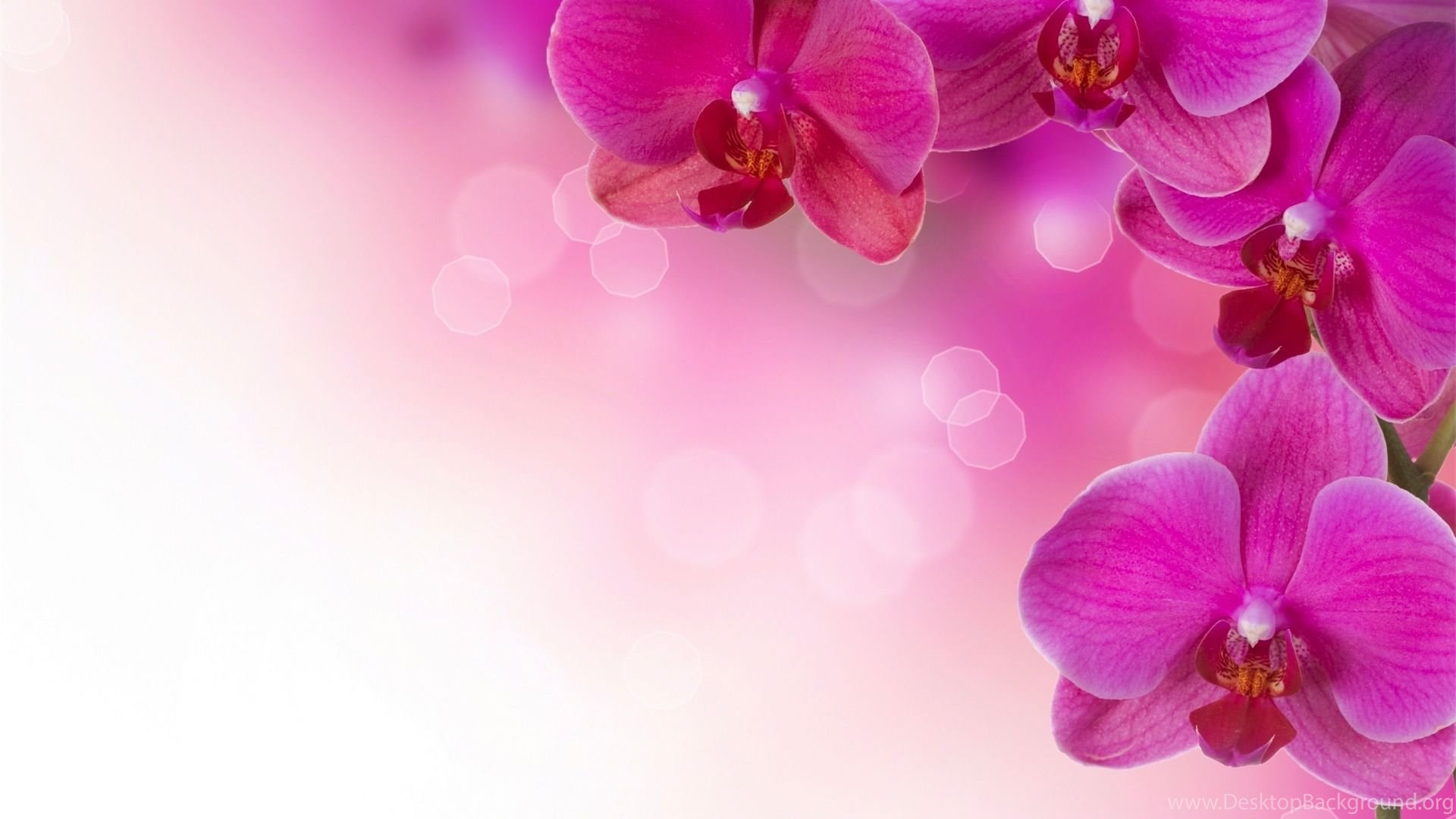 Floral Desktop Wallpapers Hd Wallpaper Backgrounds Of Your Choice