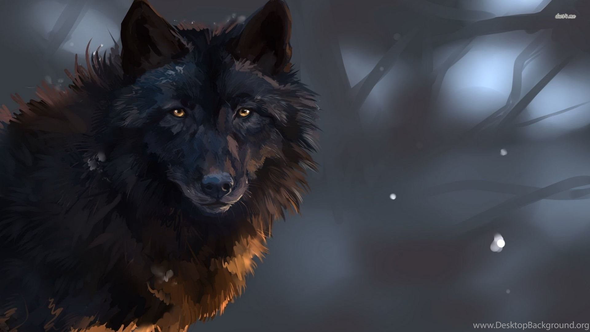 Staring Black Wolf Wallpapers Digital Art Wallpapers Desktop Background