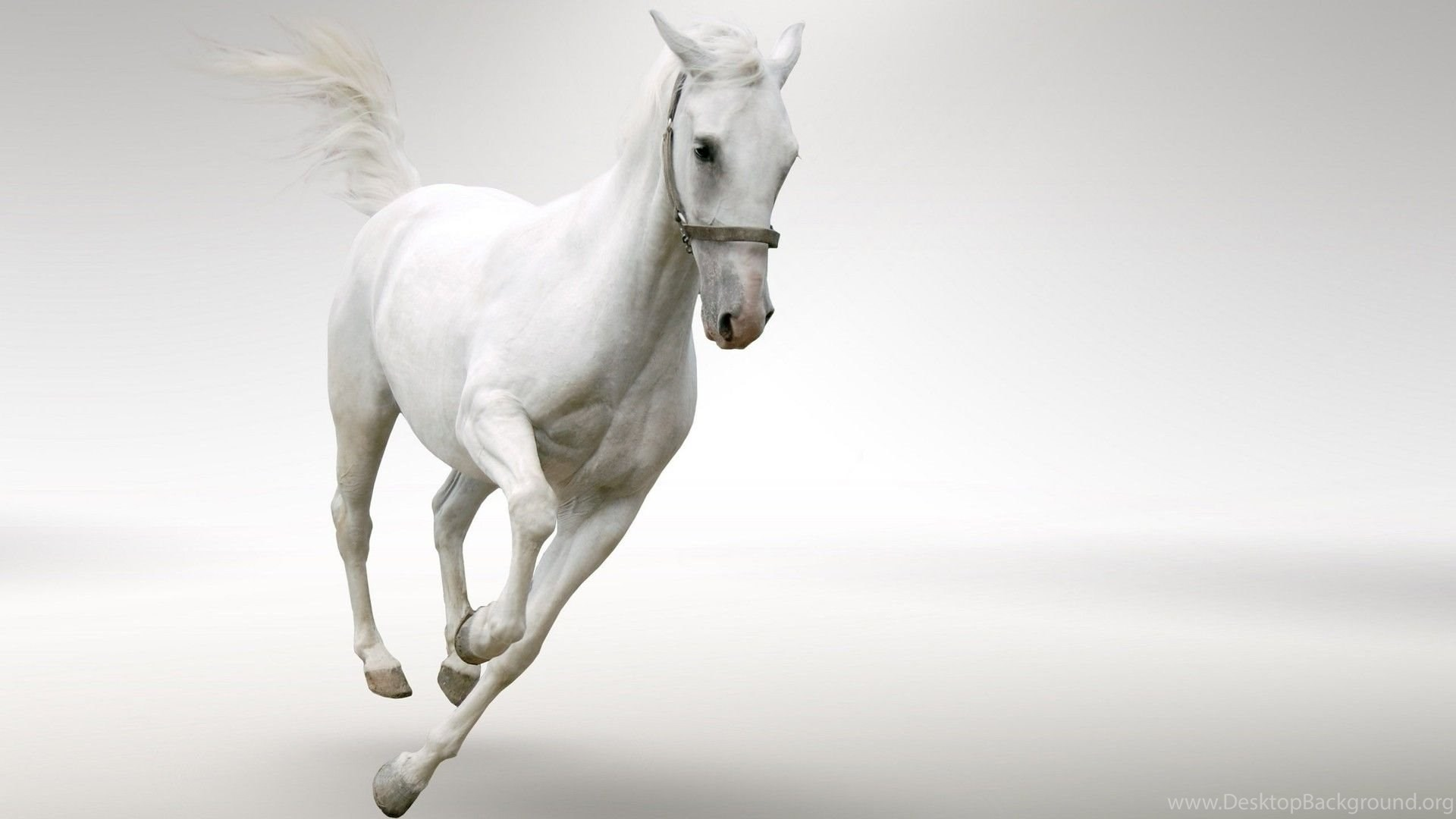 White Horse Full Hd Desktop Wallpapers And Backgrounds Image Images, Photos, Reviews