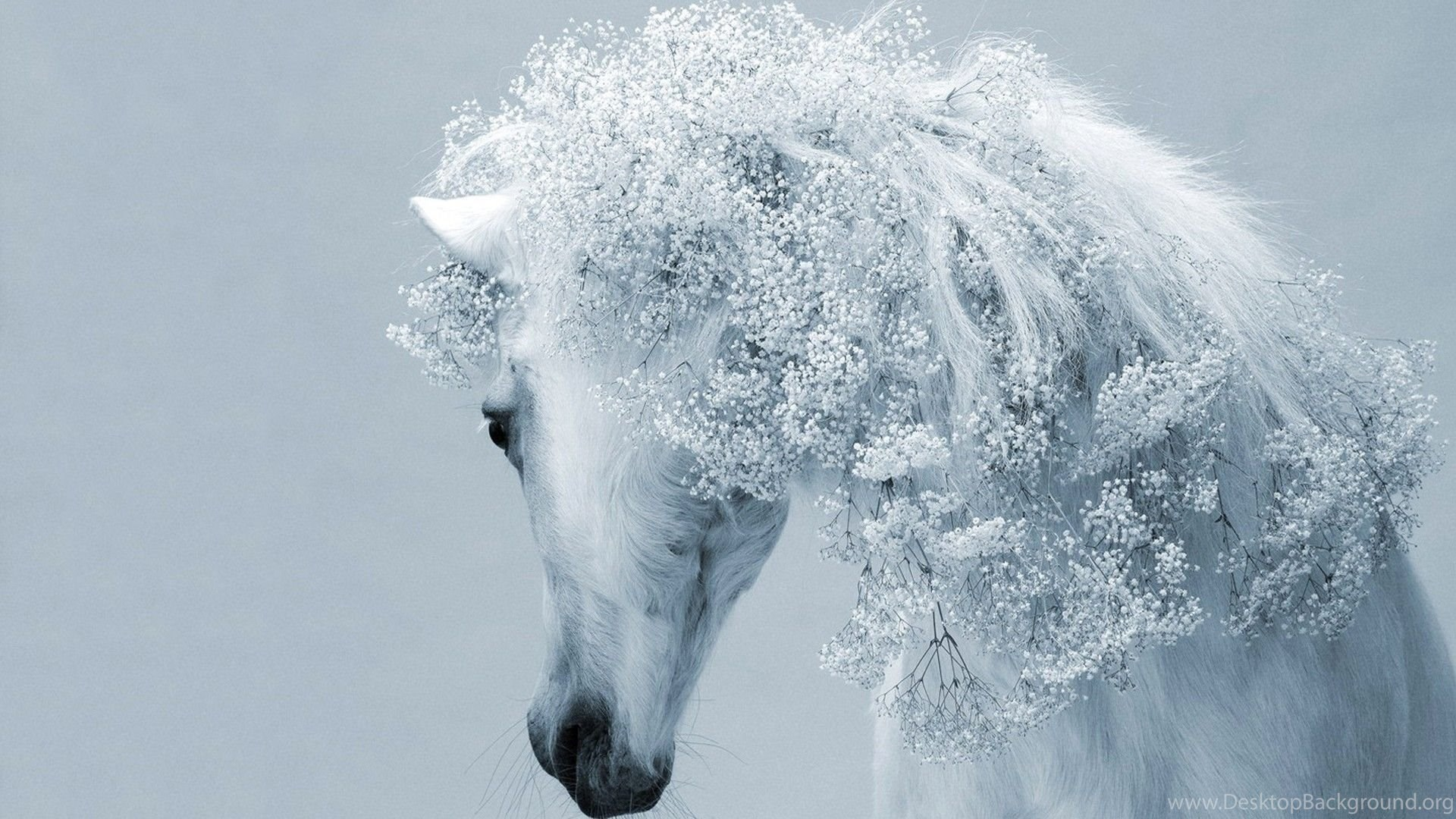 Free Wallpapers For Computers White Horse Wallpapers Hd Photos Of