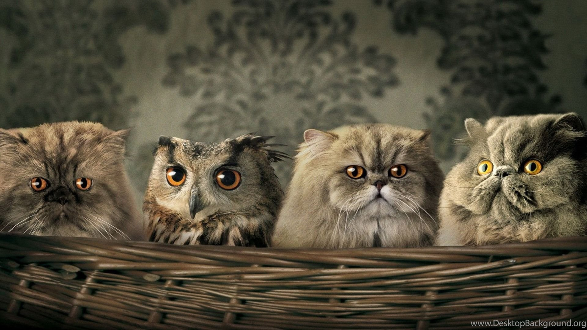Funny Animals Desktop Backgrounds HD ...