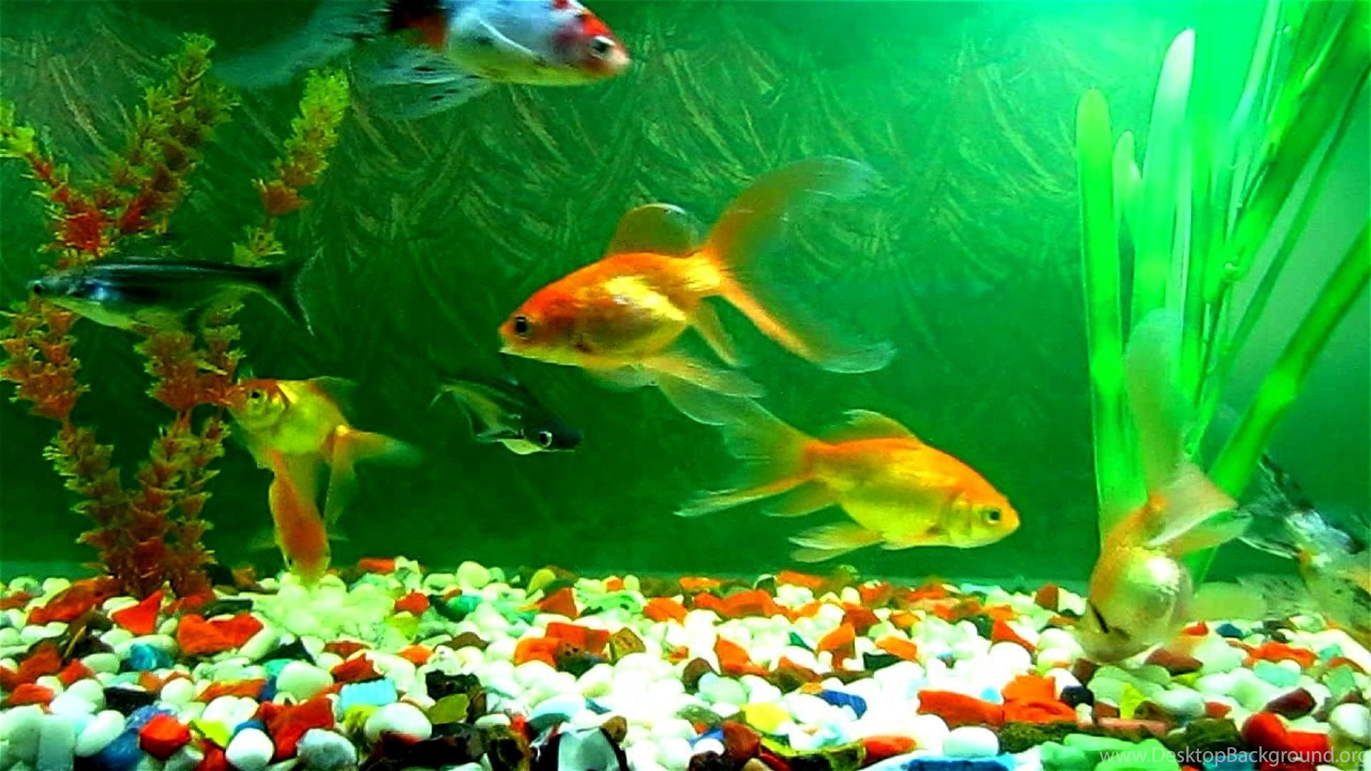 Reduce Stress By Viewing Colorful Fish Tank Backgrounds Pictures ...