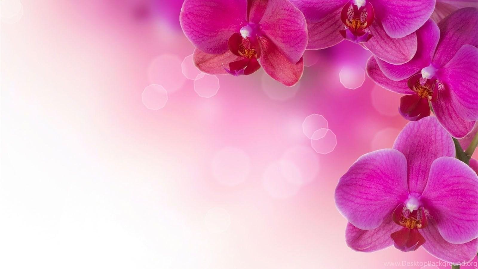 Pink flower background 1377212 - Popular