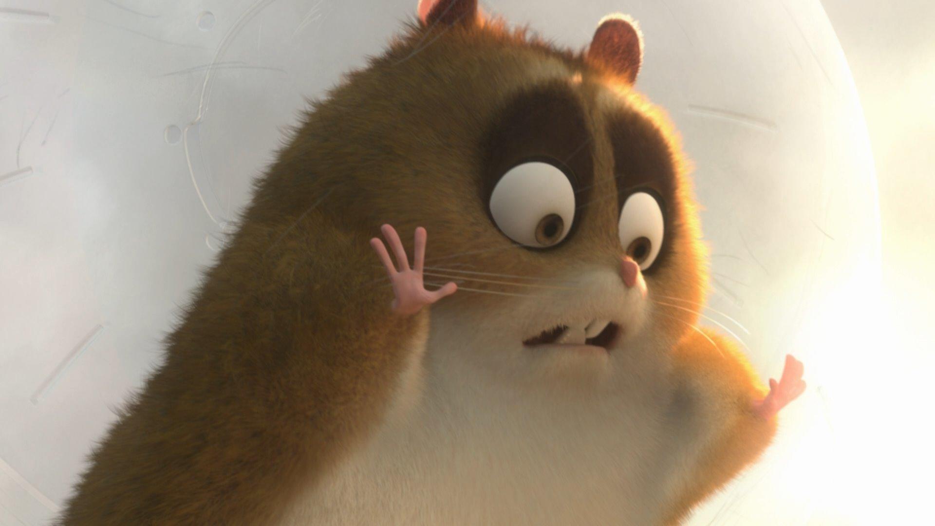 Images Of Hamster In Bolt Rock Cafe