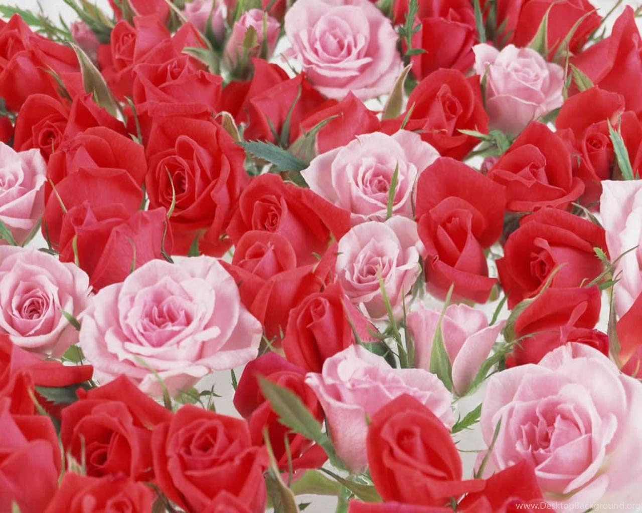 Beautiful Flowers Wallpapers For Desktop Free Downloadg Desktop