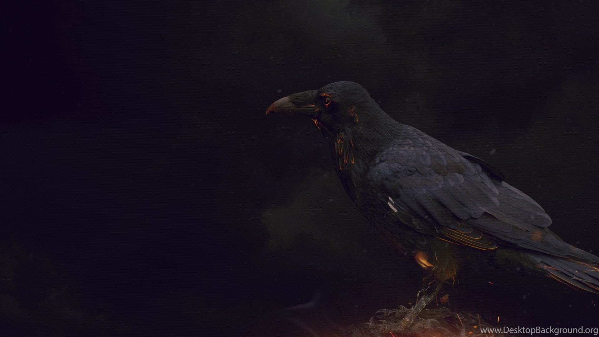 Crow Wallpapers 15 HD Wallpaper Pics The Best