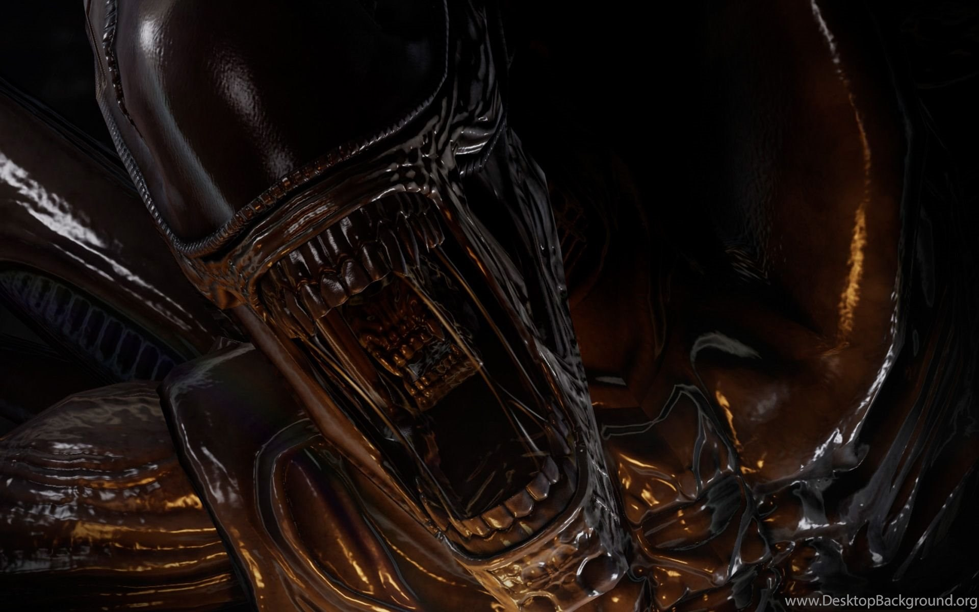 Alien Vs Predator Queen 1920x1200 Hd Wallpapers And Free Stock