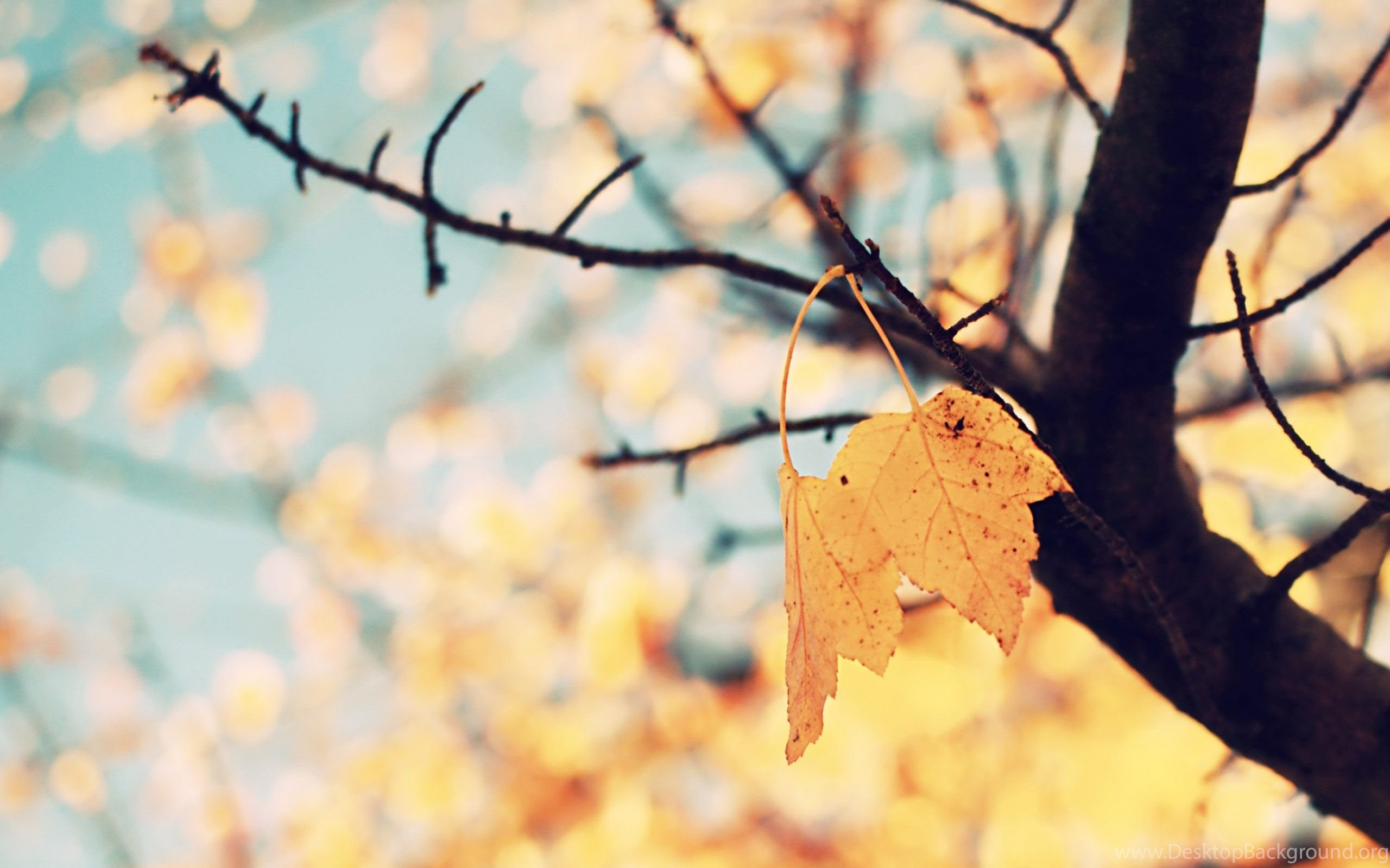 296640 pic cute fall backgrounds