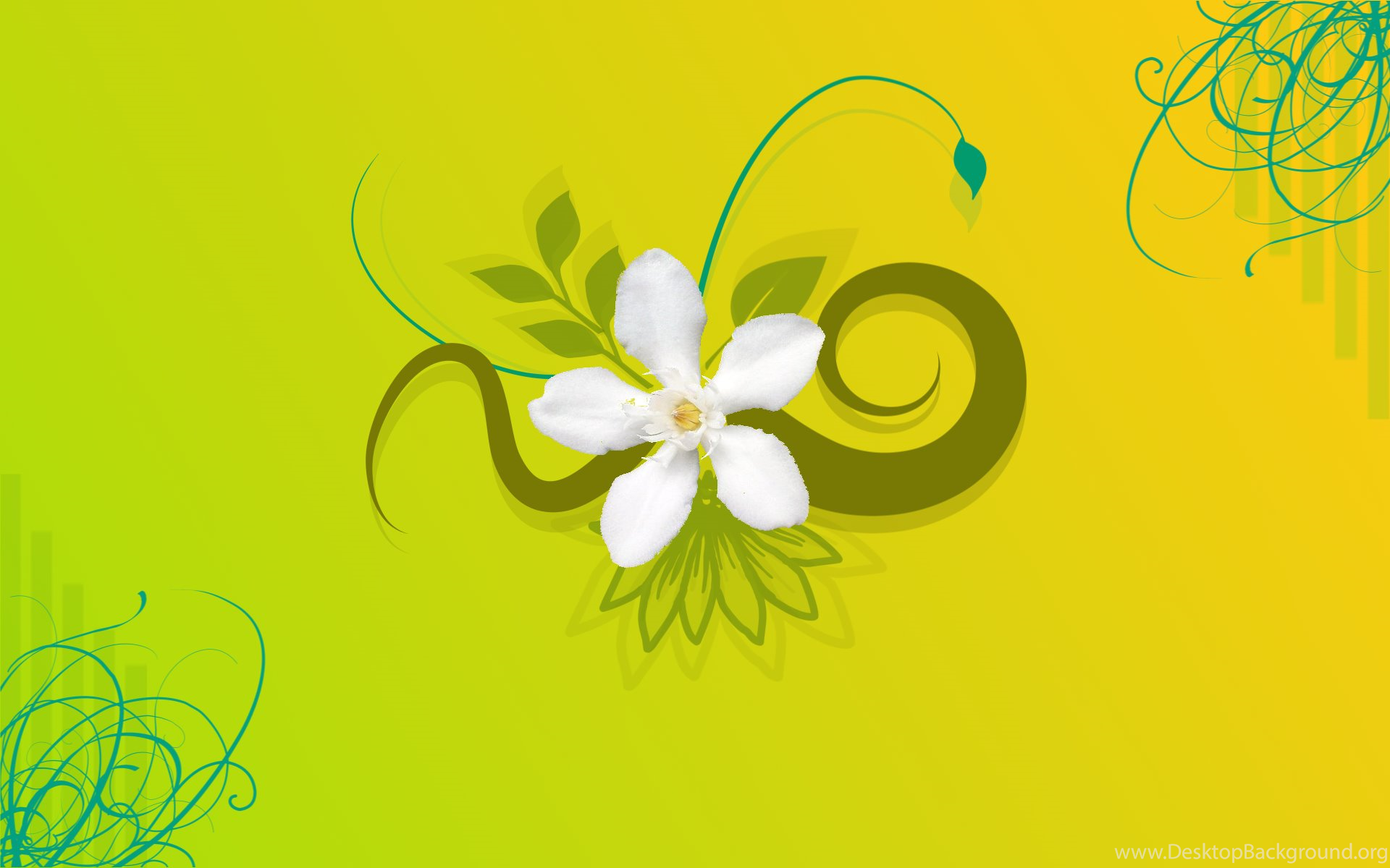 Jasmine Flower Hd Wallpapers Desktop Background