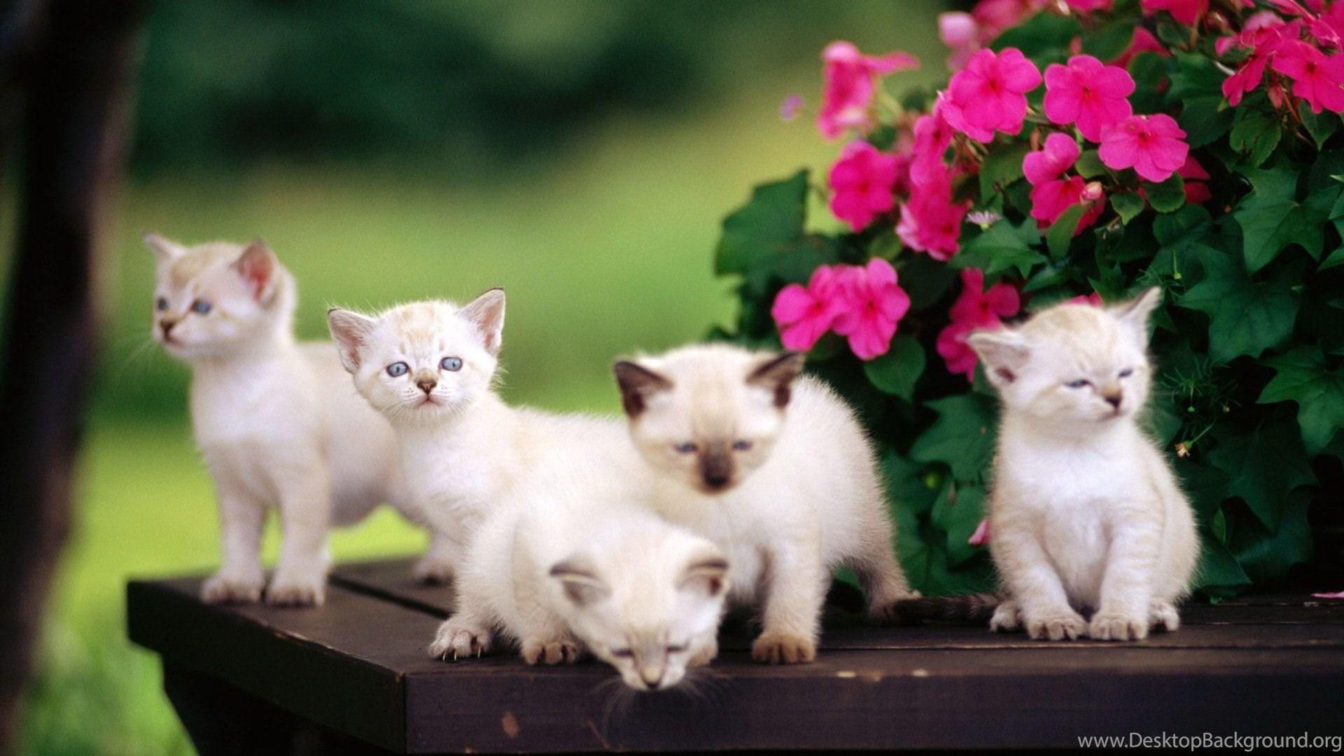 cute baby animal hd wallpapers desktop background