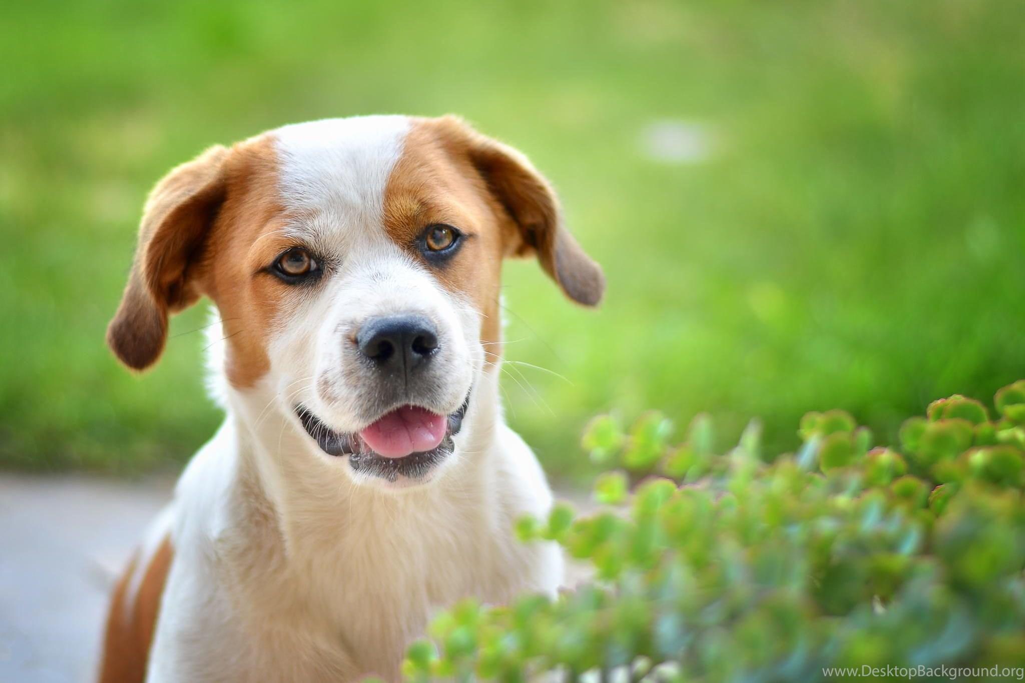 best friends, cool animals, dog desktop images, animal backgrounds