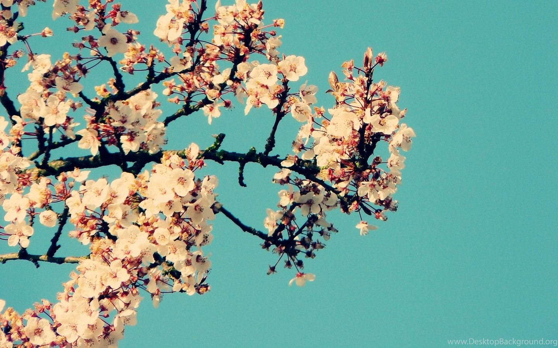 Desktop Backgrounds Tumblr HD Wallpapers Desktop
