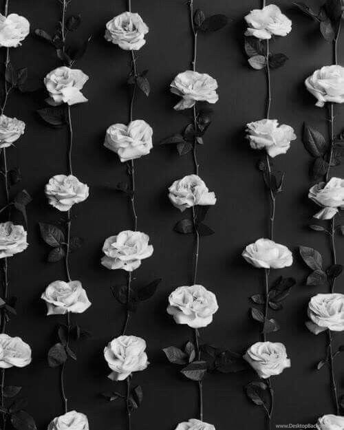319602 black and white roses wallpaper lockscreen