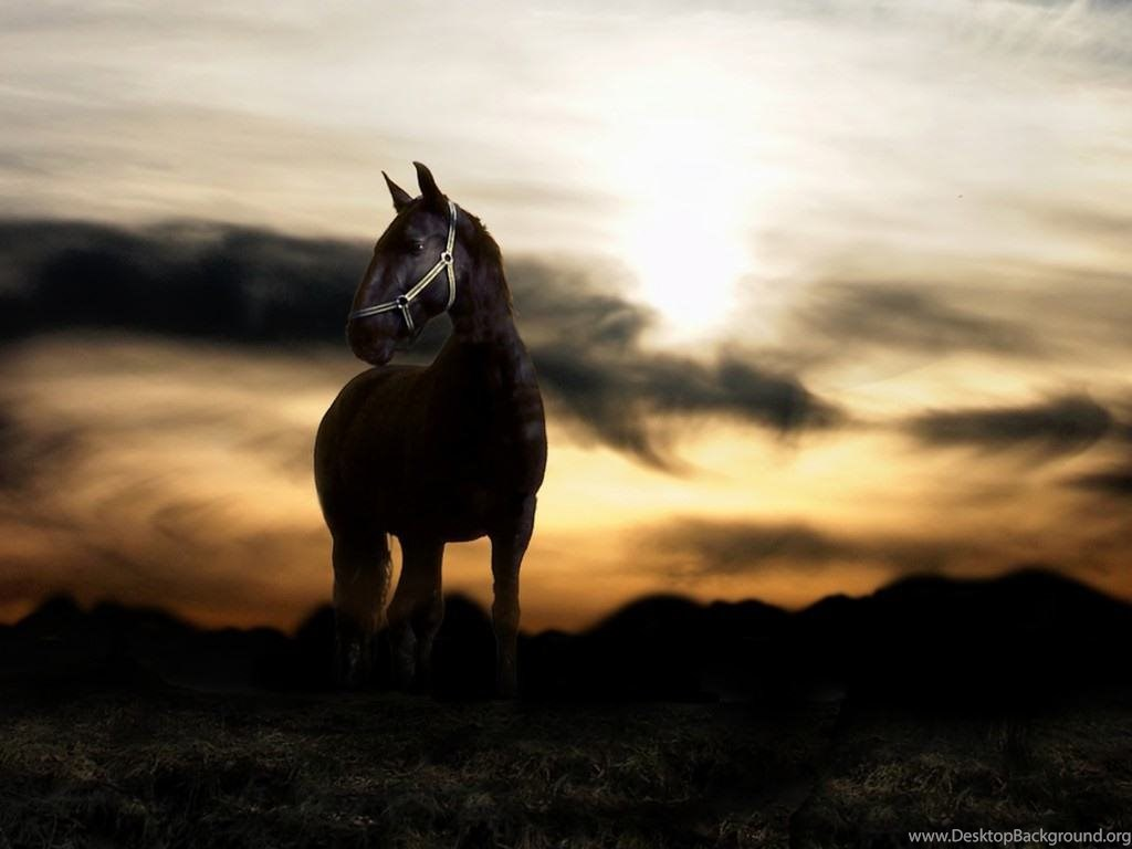 Cool Horse Backgrounds Wallpapers Cave Desktop Background