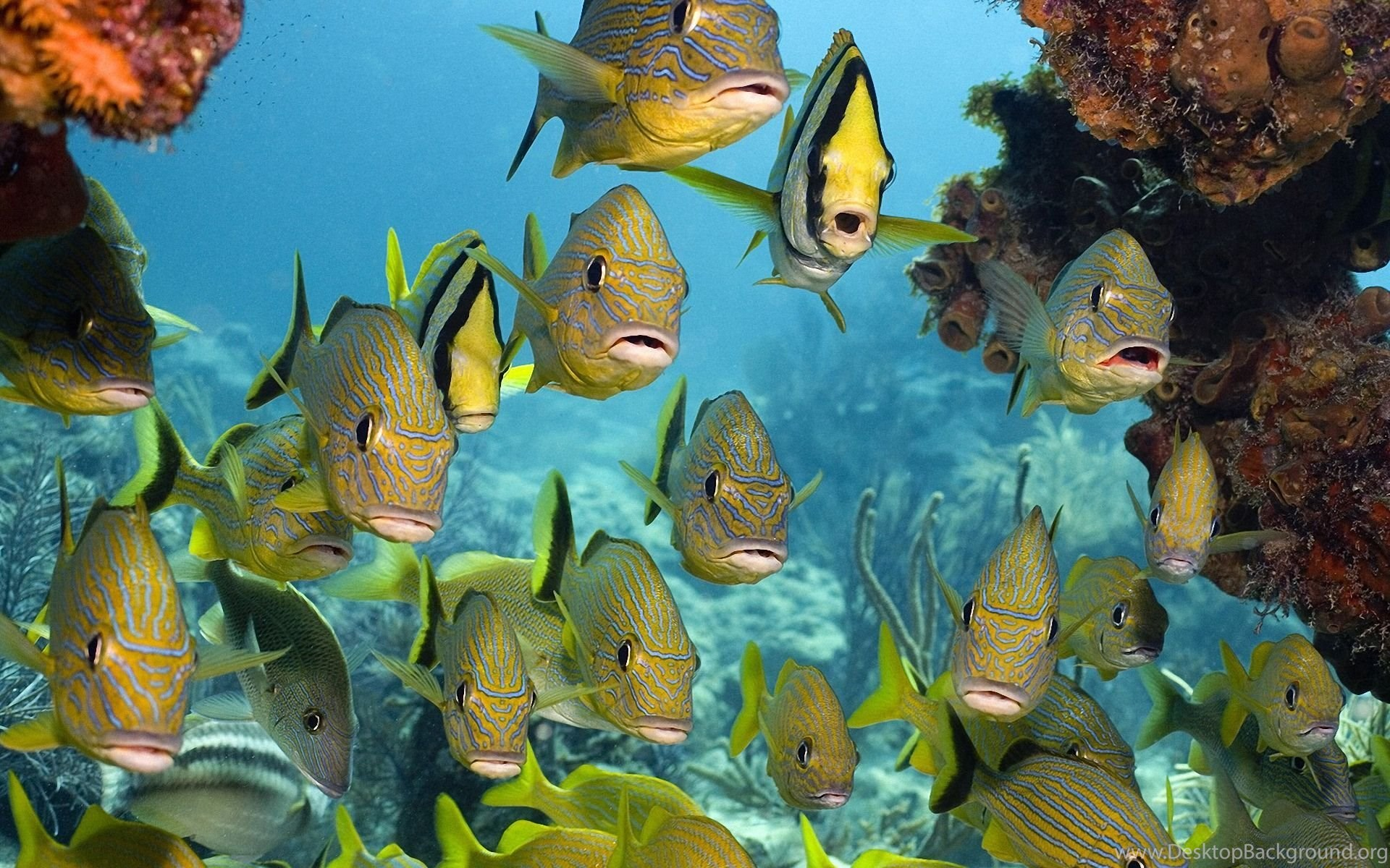 Tropical Fish Wallpapers 1920x1200 Wallpapers Sea Life 1920x1200