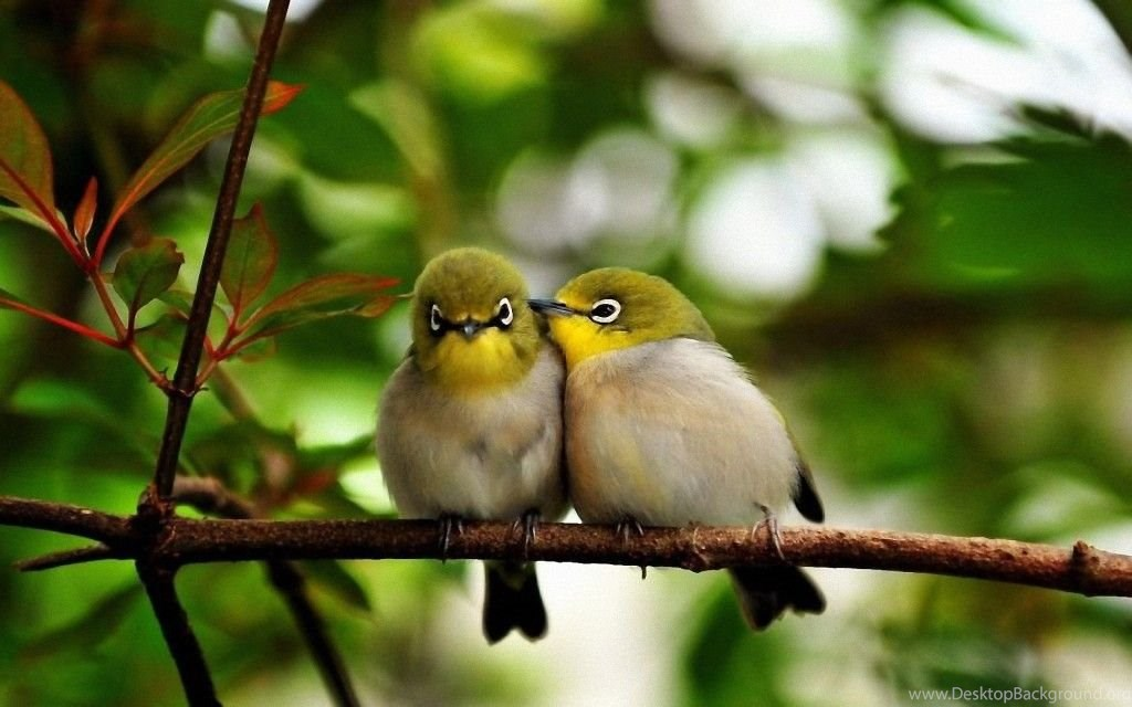 37 Love Birds Wallpapers Hd Free Download For Desktop Magazine Fuse