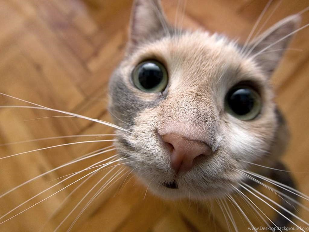 335342 hd funny and cute cat wallpapers imagehost