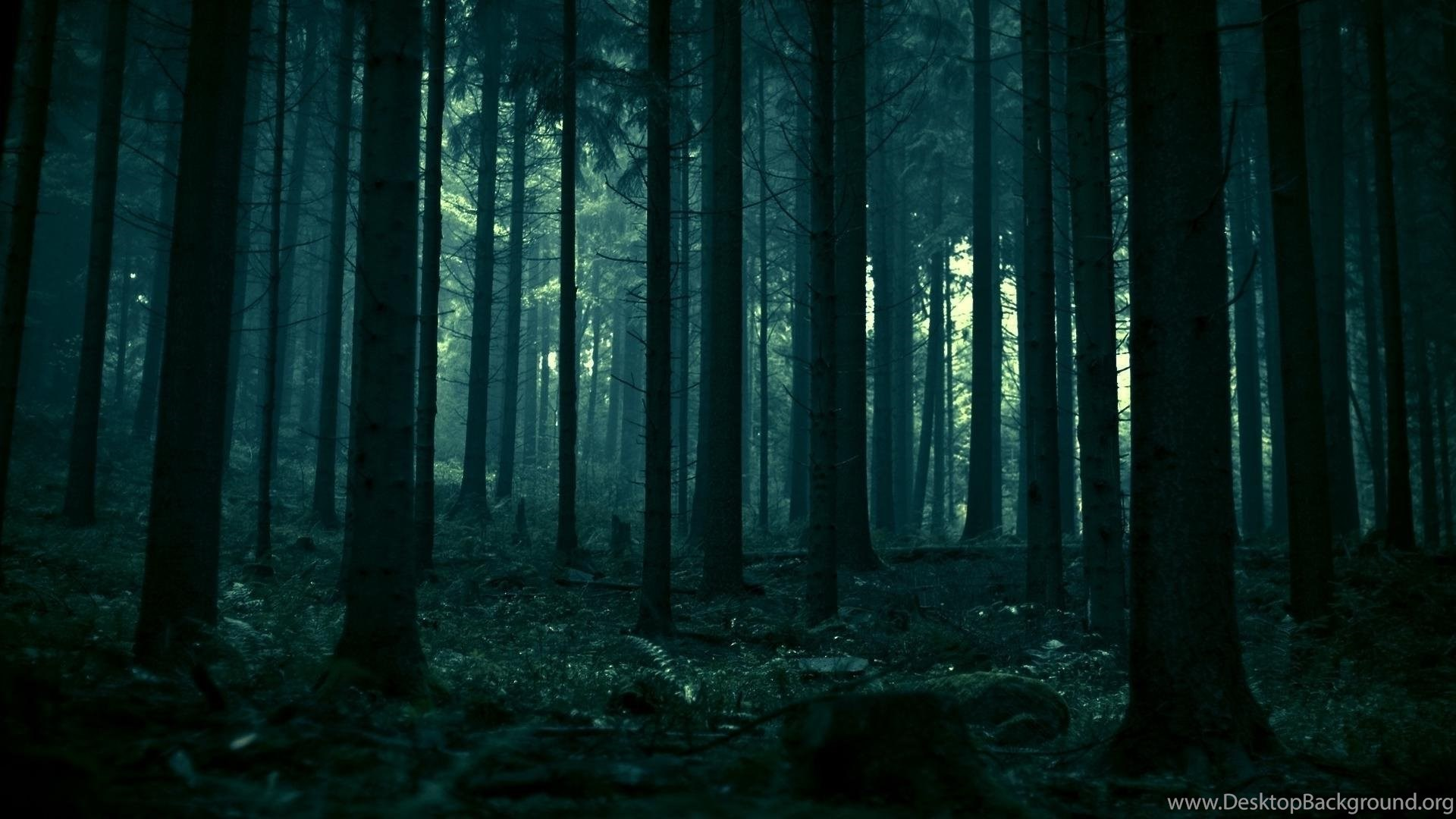 1440x900px Fairy Dark Forest Wallpapers Desktop Background