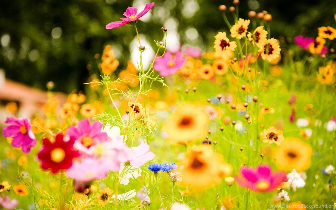 Lovely Flowers Birthday Flowers Wallpaper Images Free Download