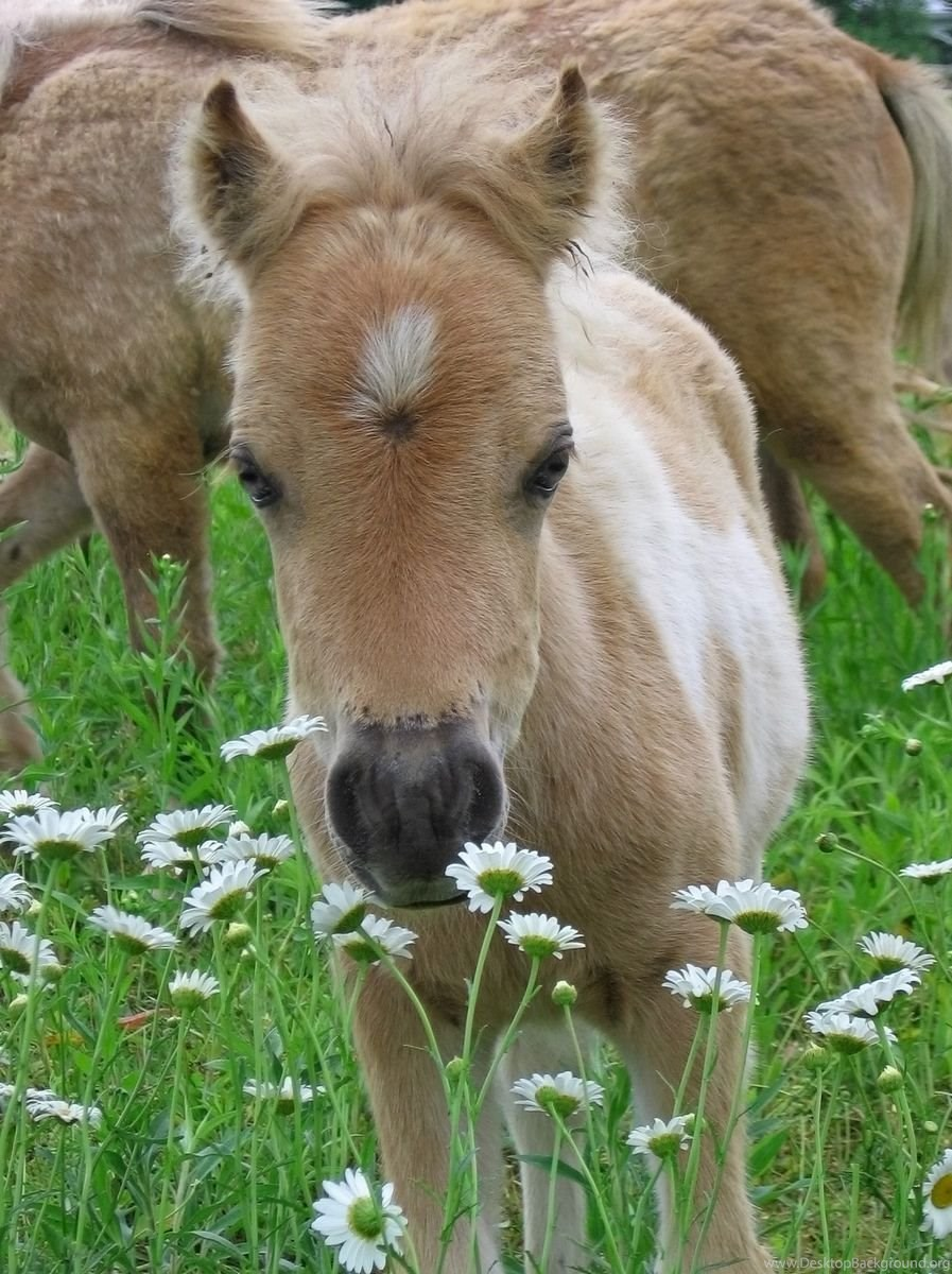 Cute Baby Horse Pictures Wallpapers Hd Base Desktop Background
