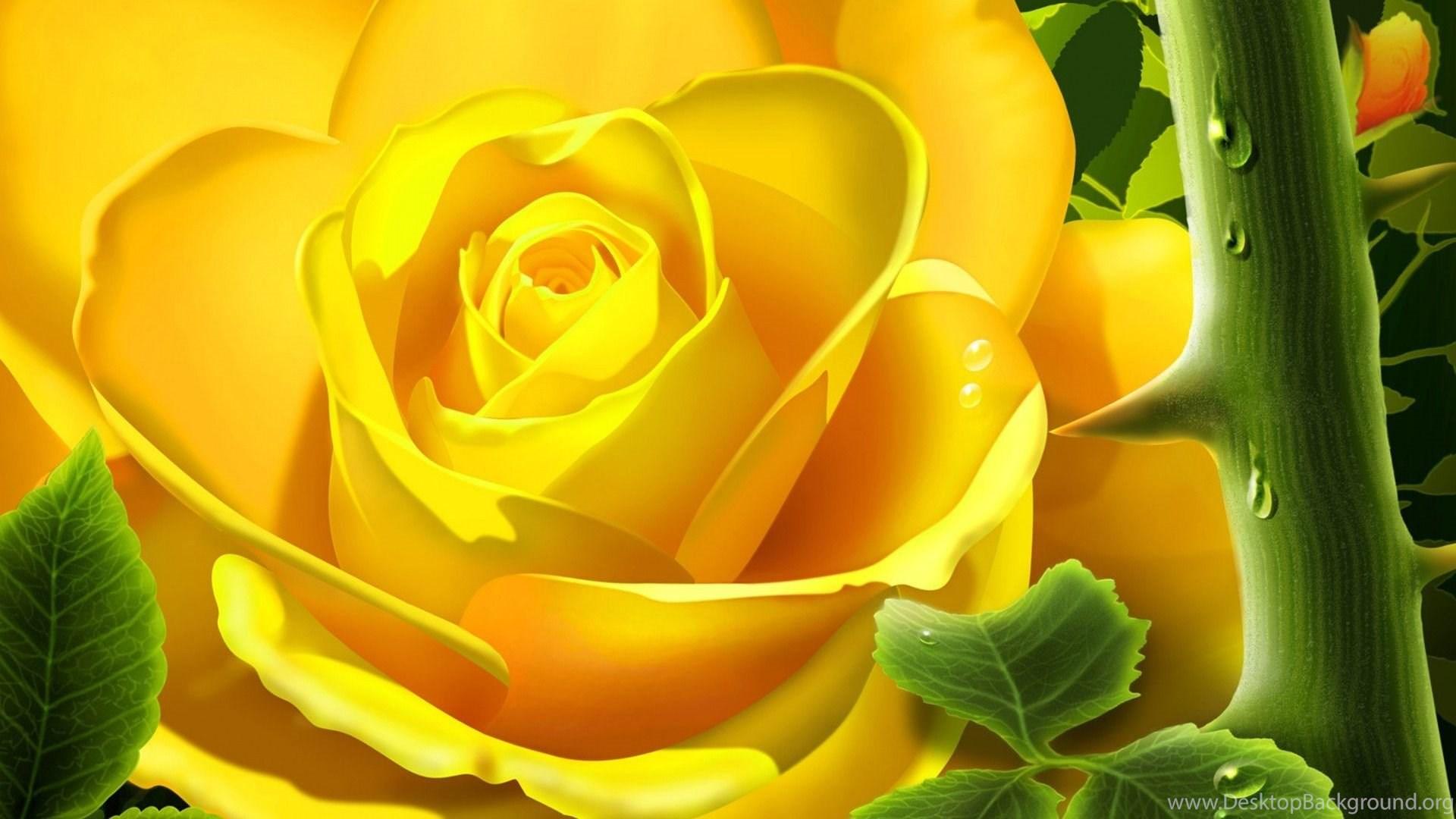Yellow Rose Hd Wallpapers Desktop Background
