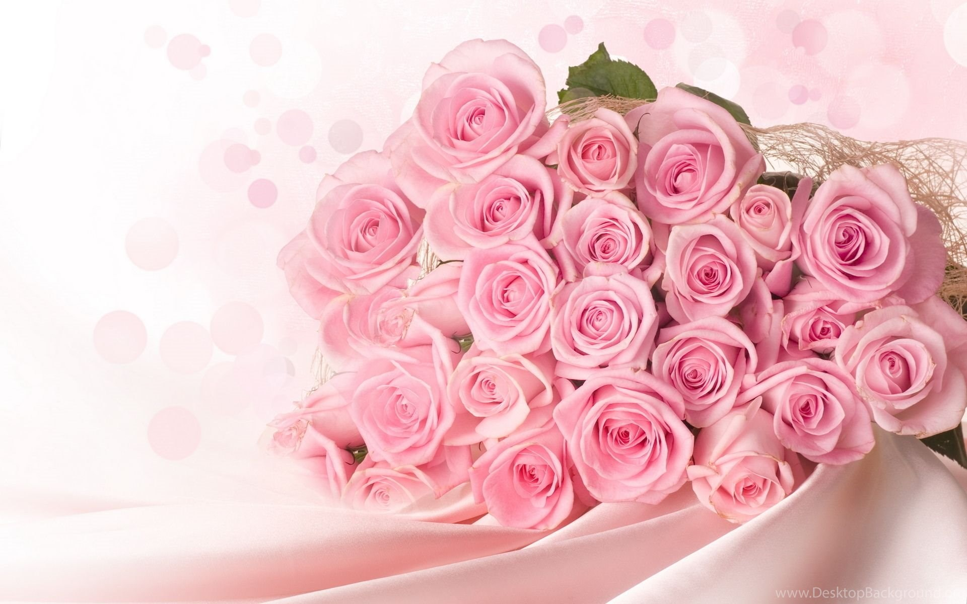 Pink Roses Wallpapers 11083 1920x1200 UMad Desktop Background