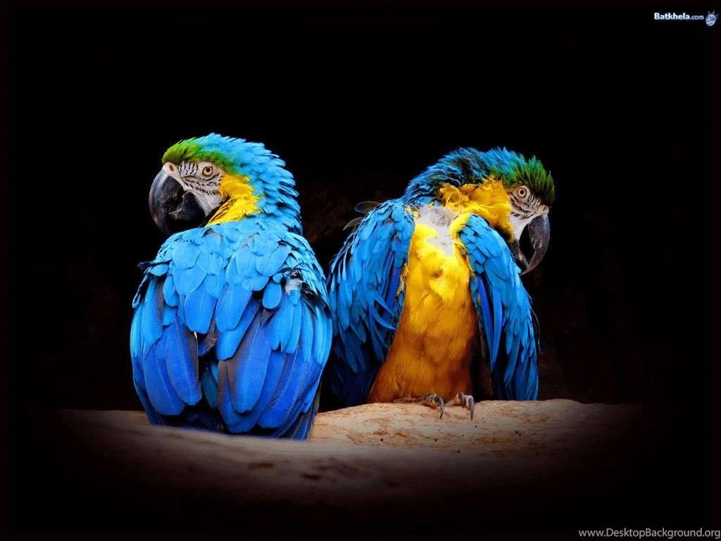 Birds National Geographic Wallpapers 6909378 Fanpop Desktop Background