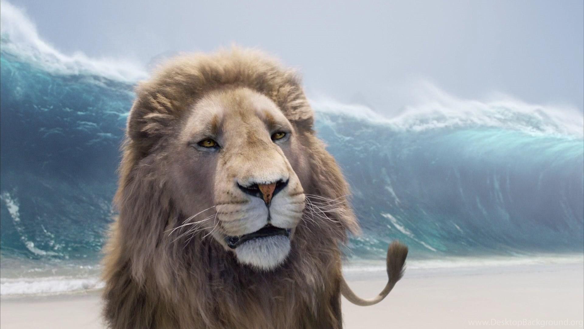 малыша лев аслан из нарнии картинки год хороший повод