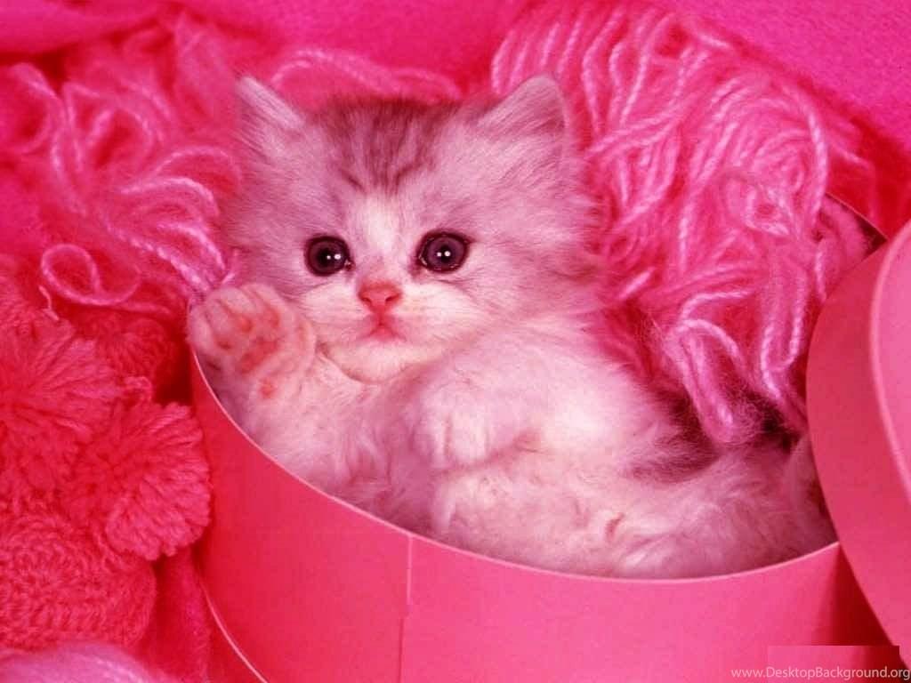 Cute Cats Desktop Wallpapers Free Obtain Hd Images New Desktop