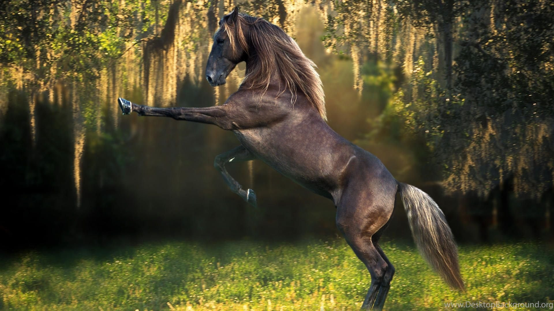 Horse Wallpapers For Laptops 16175 Hd Wallpapers Site Desktop Background