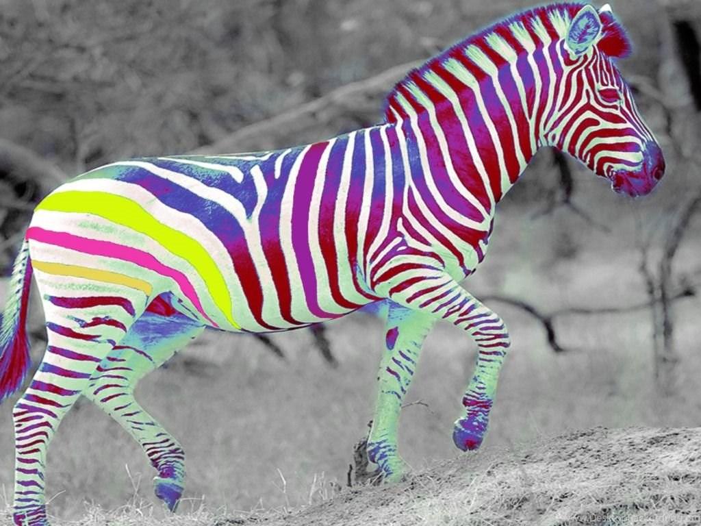 создания такой прикольные фотообои зебры для мобилки обдумать покупку выбрать