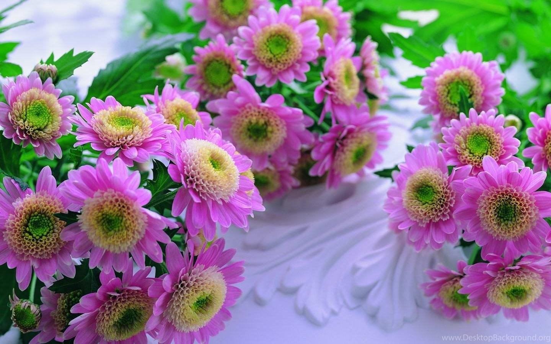 Download beautiful flowers wallpapers hd wallpapers desktop original size 2267kb izmirmasajfo