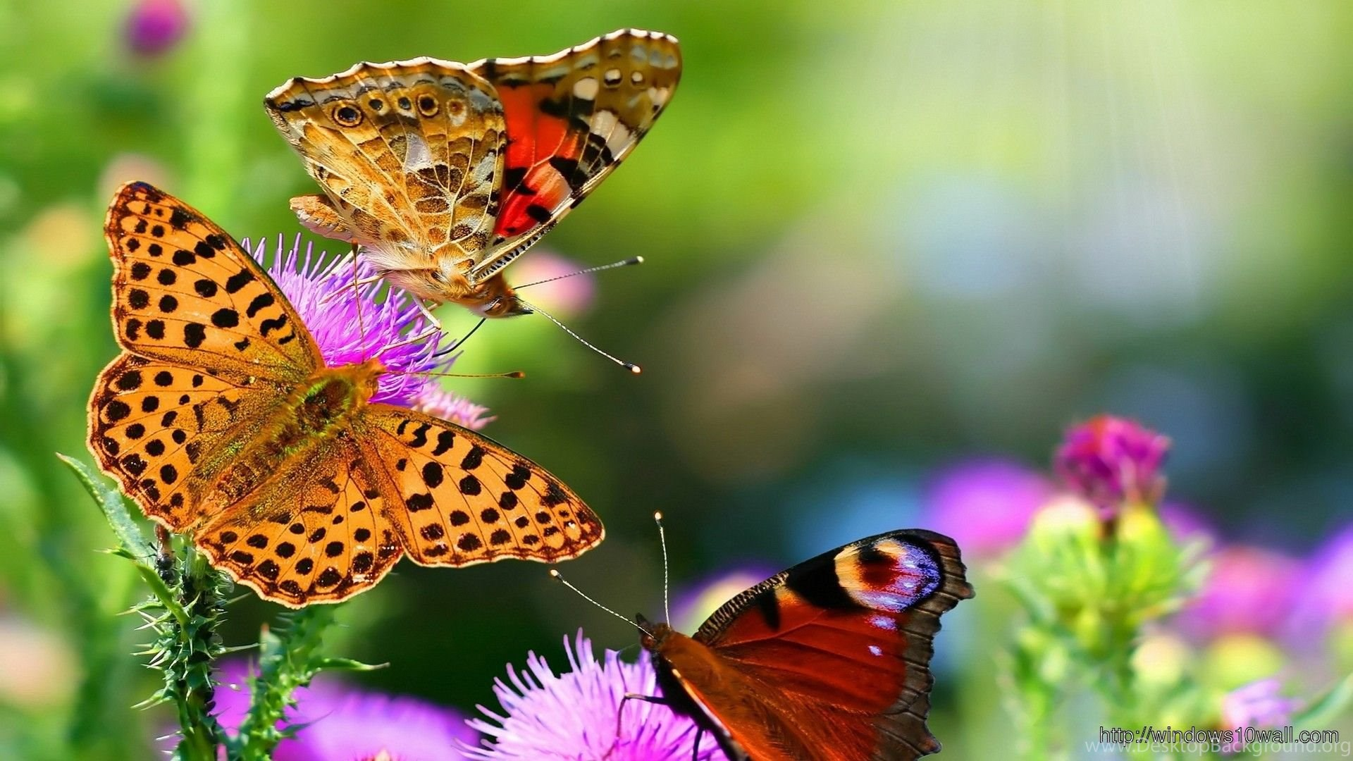 Nature Animal Hd Wallpapers - Windows 10 Wallpapers ...