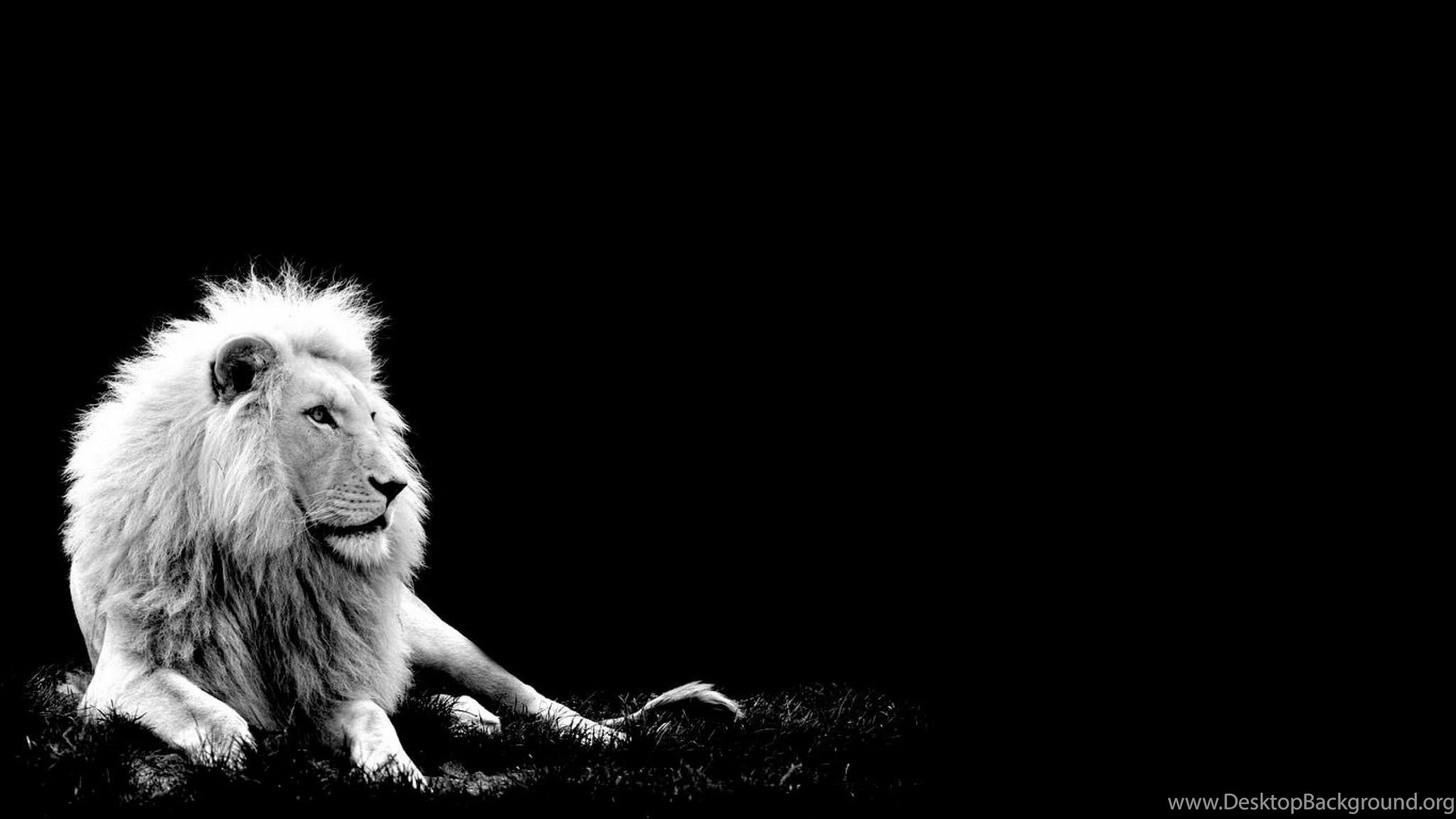 Wallpapers White Lion Hd Cub King Desktop Background