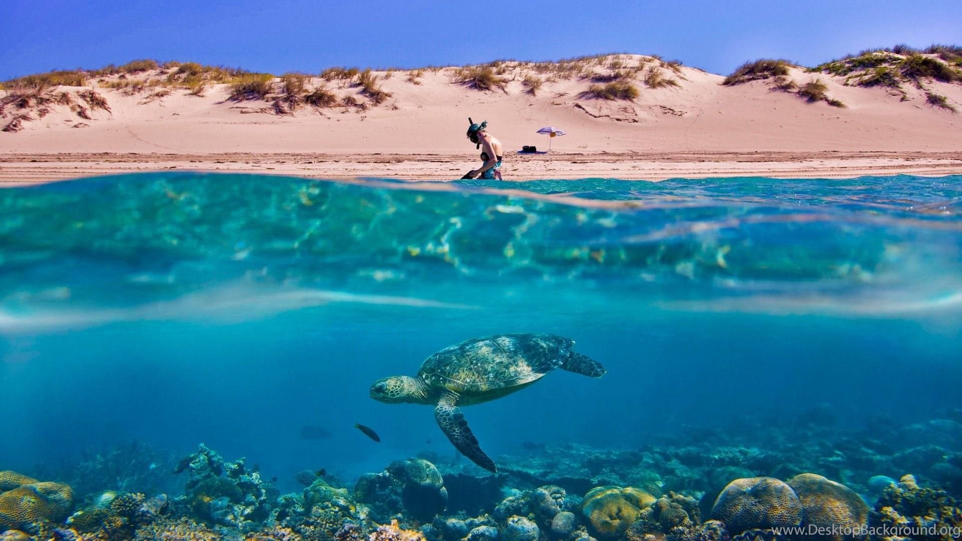 Turtle Beach Macbook Wallpapers Desktop Background