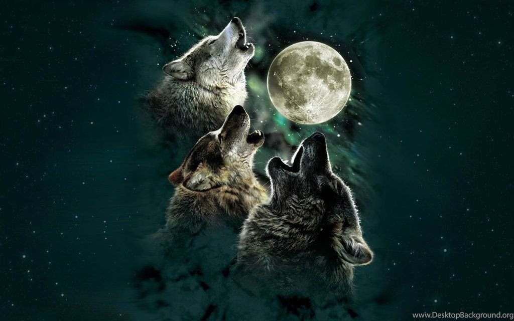 Wolf pack howling wallpaper