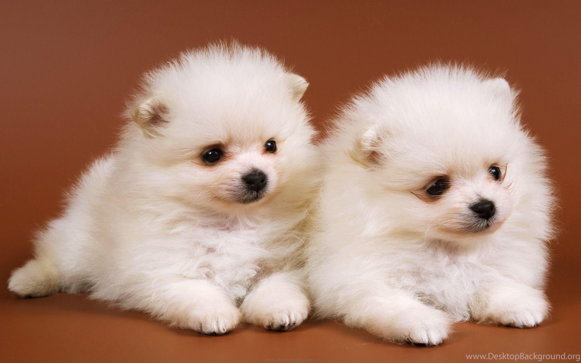 cute baby dog wallpapers for desktop desktop background