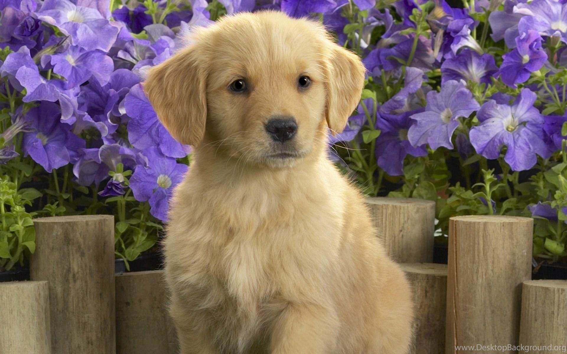 Cute Dog Wallpapers Widescreen For Desktop Backgrounds Ndemok Com Desktop Background
