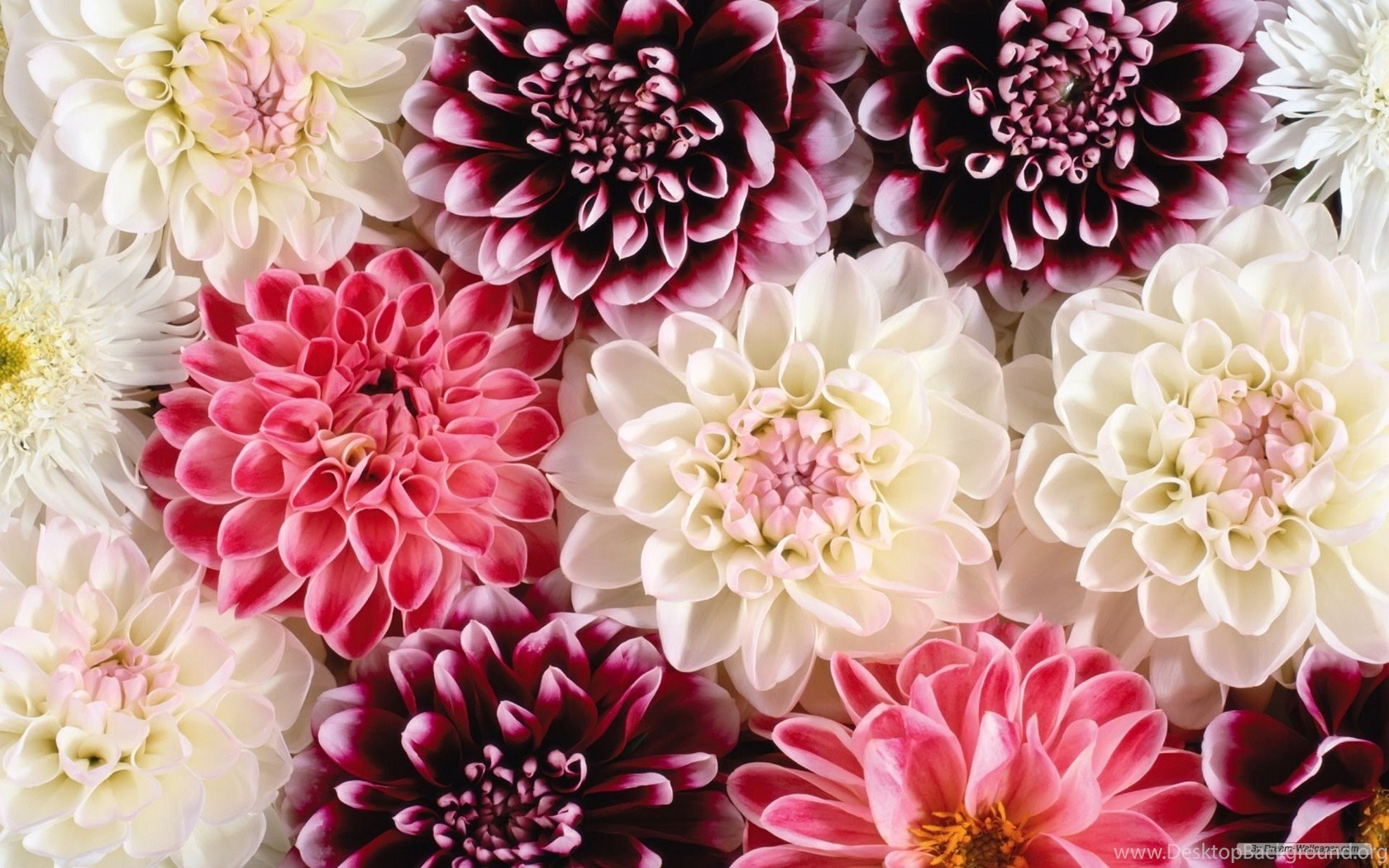 Beautiful Wallpapers Flowers All Wallpapers New Desktop Background