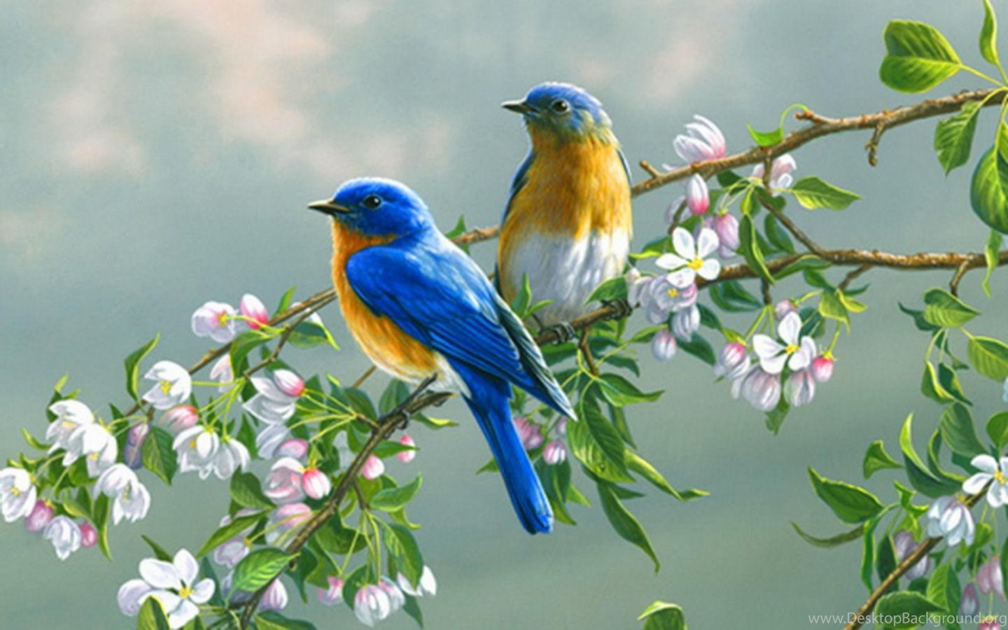 download cute birds beautiful colorful new latest wallpapers