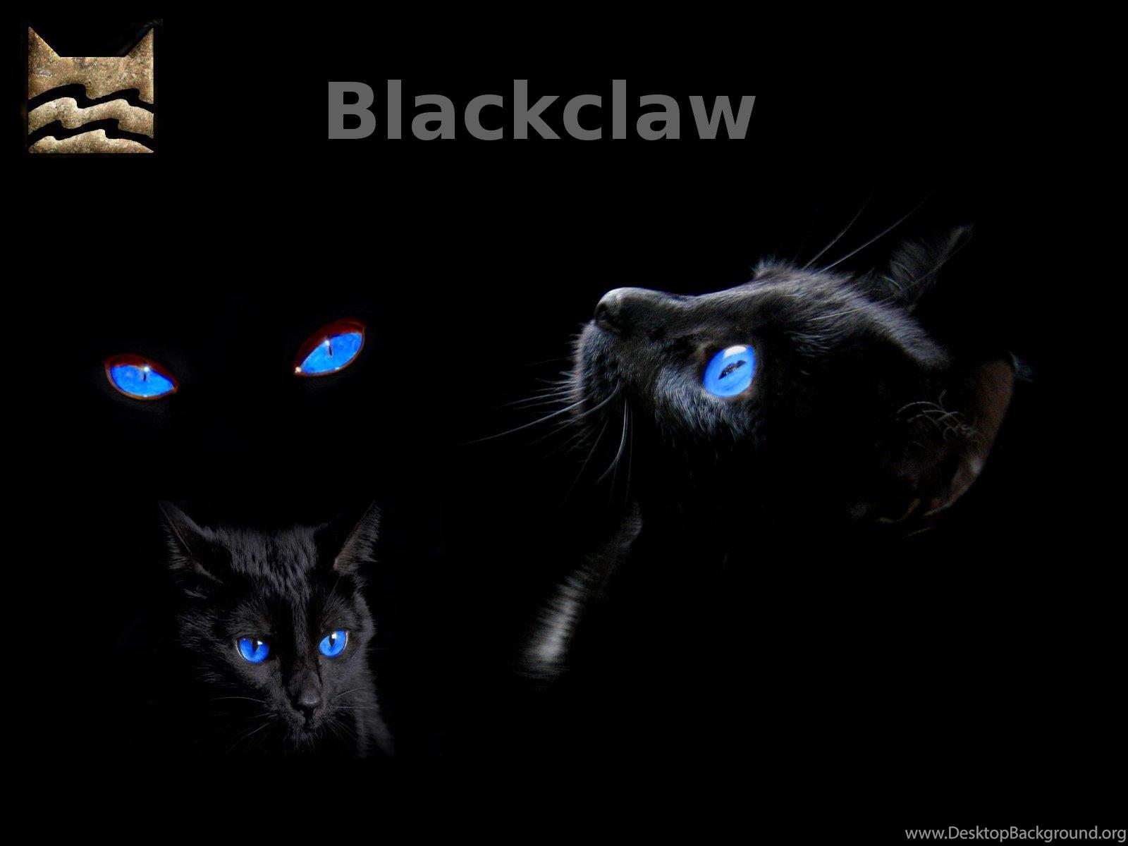 warrior cats wallpaperssilverhawl on deviantart desktop background