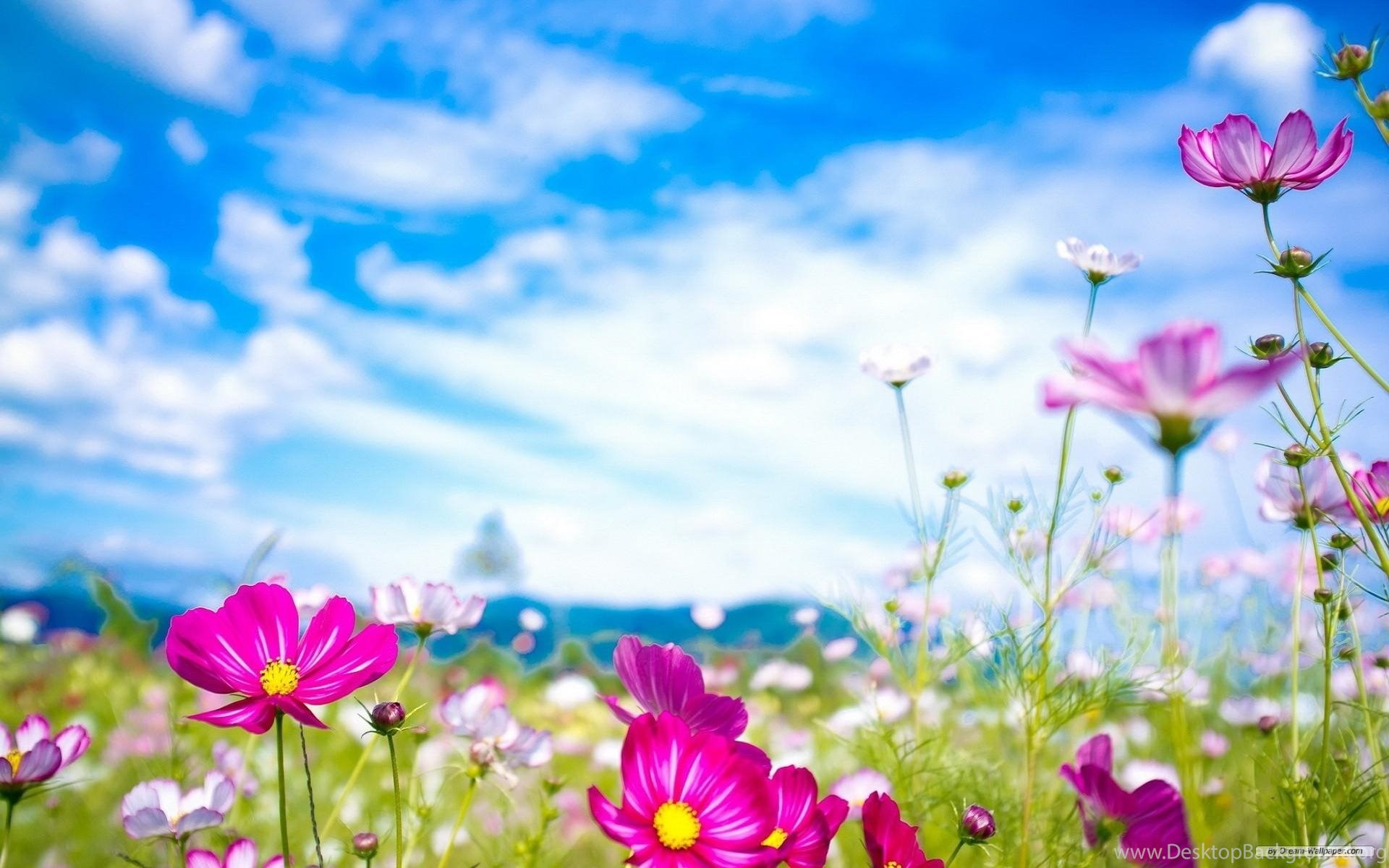 Spring flowers backgrounds desktop backgrounds desktop background widescreen mightylinksfo