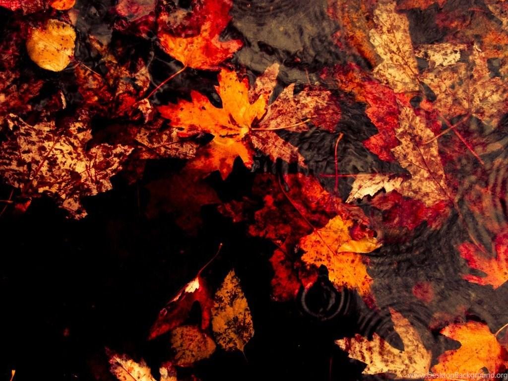 553748 autumn rain hd