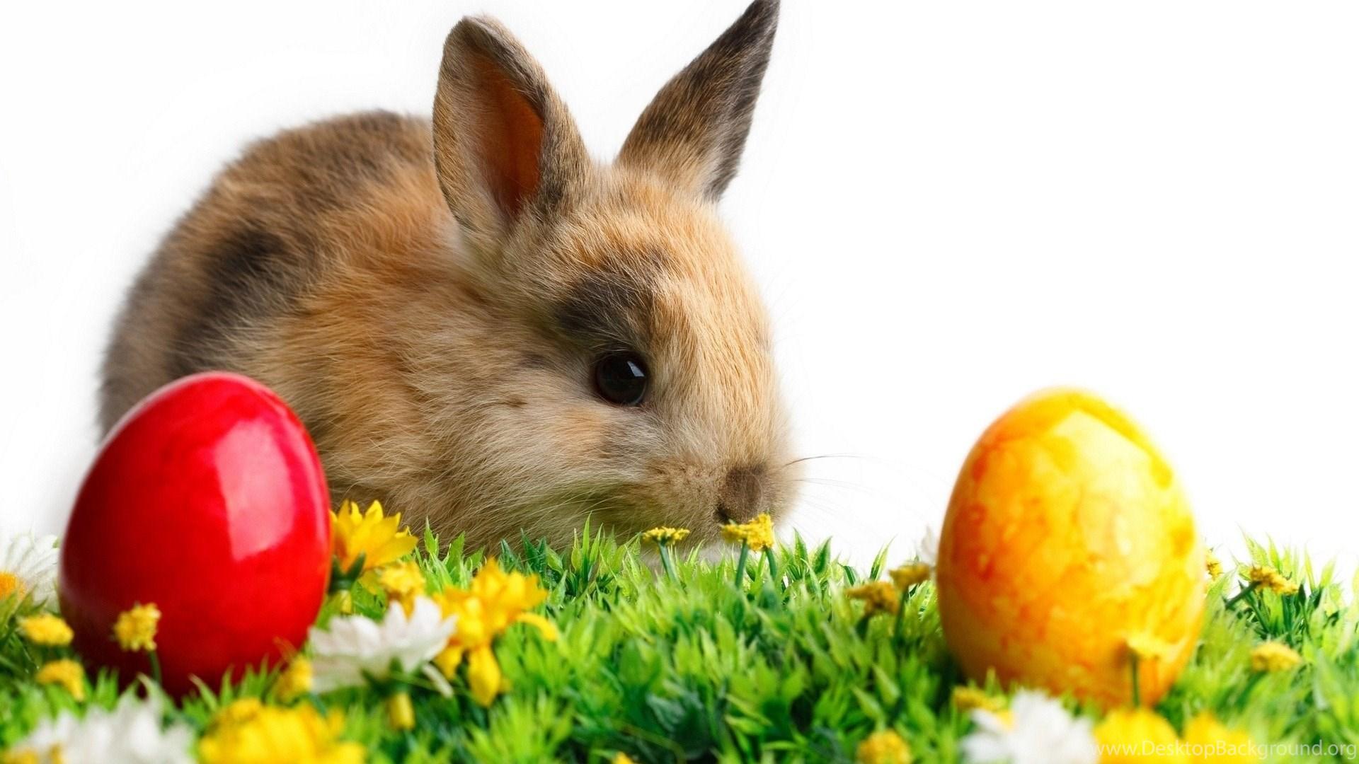 Easter Bunny Wallpapers Desktop Background