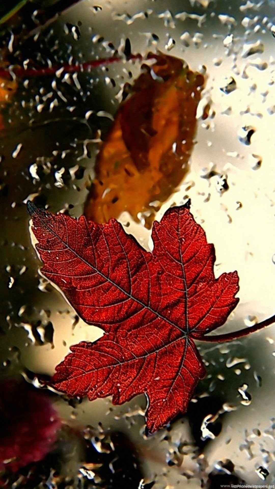 Red Leaf Iphone 6 Wallpapers Hd And 1080p 6 Plus Wallpapers Desktop Background