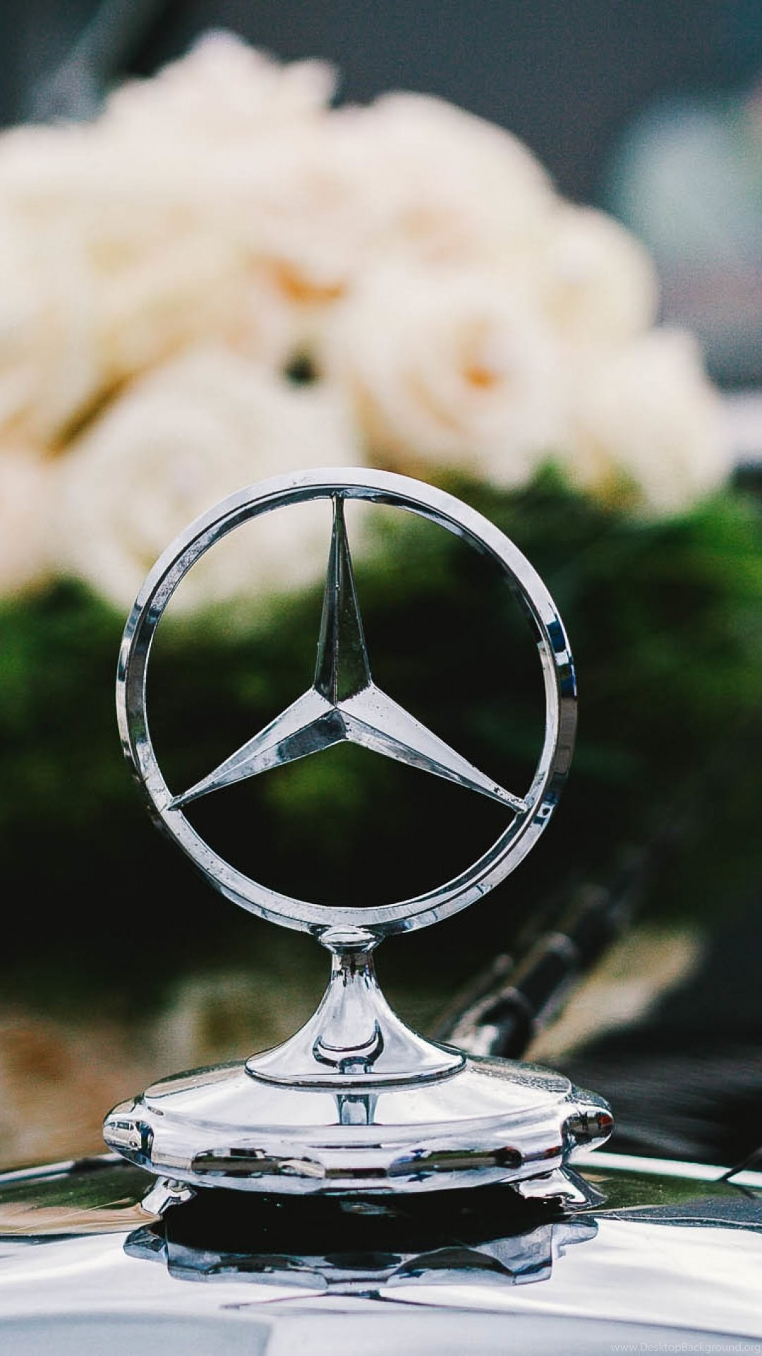 Hd Backgrounds Mercedes Benz Logo Badge Vintage Car Wallpapers