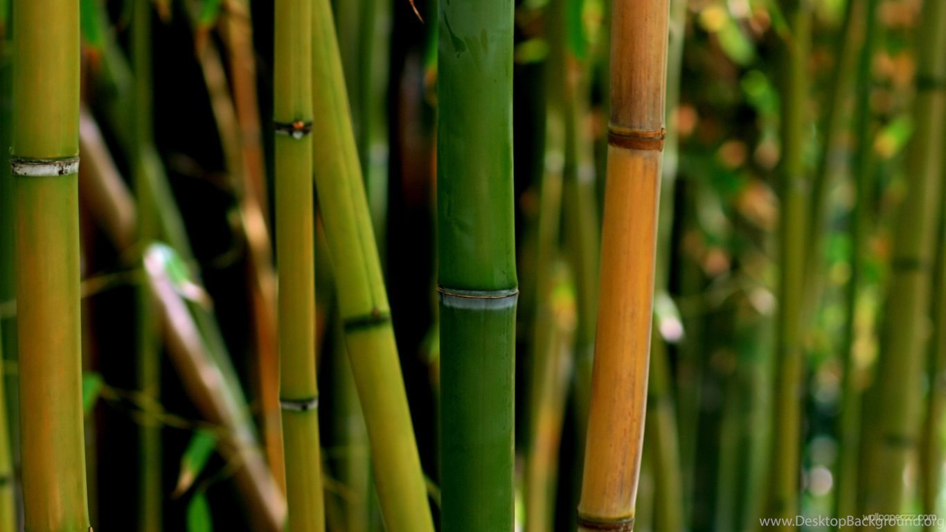 yellow and green bamboo hd wallpapers desktop background